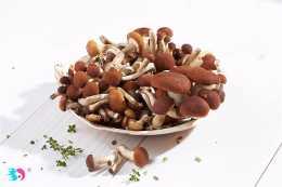 怎麼挑選優質的茶樹菇?茶樹菇不適合哪些人吃?