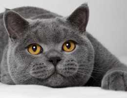 跳蚤小知識,喜歡養小貓小狗的人士必看