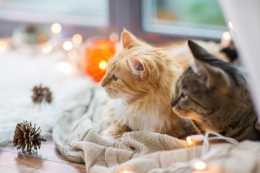 夏天為防蚊蟲叮咬,需要進行驅蚊,家裡有貓不能用電蚊香液嗎
