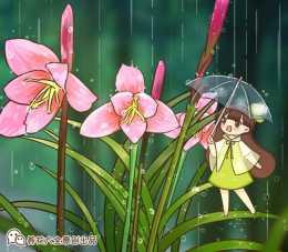 啥植物能抗住下雨天?當屬風雨蘭,暴雨也能勇敢闖