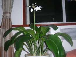 把這6種花放在衛生間,除溼滅菌實用性強,耐陰養護簡單