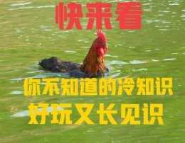 竹子會開花,雞會遊戲?這些農村冷知道你知道嗎?來見識一下吧