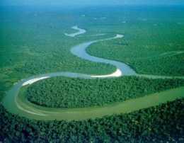亞馬遜熱帶雨林的固碳能力,已經從吸收變為排放,拿什麼來拯救?