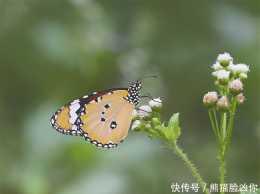 林草科普|蝶舞漸欲迷人眼