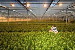 智慧蔬菜大棚的種植利潤是多少?