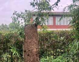 要小心!上海男子修剪自己種的樹被城管罰14萬,怎麼才能砍自家樹