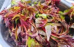 4種春天可以吃的植物,需要注意哪些,怎麼吃?