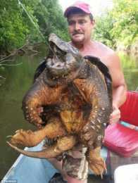 為大家介紹幾種常見淡水龜!看看有幾種你不認識?