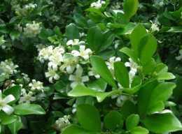 白色的花有哪些?5種花清新淡雅好漂亮,是你喜歡的嗎?