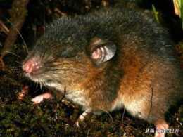 """鼠年說鼠-這些""""老鼠""""你見過嗎?(第四期)"""