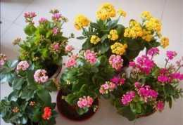 5種耐旱花,不用經常澆水,沒時間養花就養它