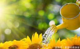 氣溫高了,有幾種植物是例外,不能多澆水,避免只剩空花盆