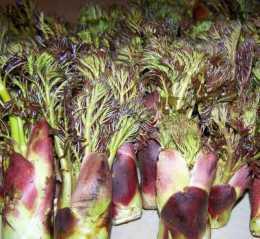 刺嫩芽居然可以具有補氣、活血、利溼、止痛、補腎等作用
