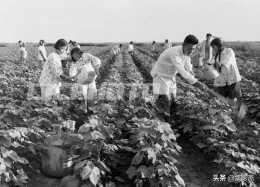宿遷泗陽縣六十年代老照片